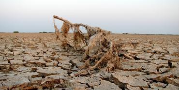 "Foto: Malay Maniar, ""Dried, A twig dried after floods in the little rann of kutchh"", www.flickr.com/photos/malaymaniar/2017552437"